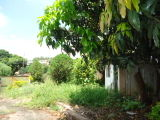 Ref. VA190216 - Quintal